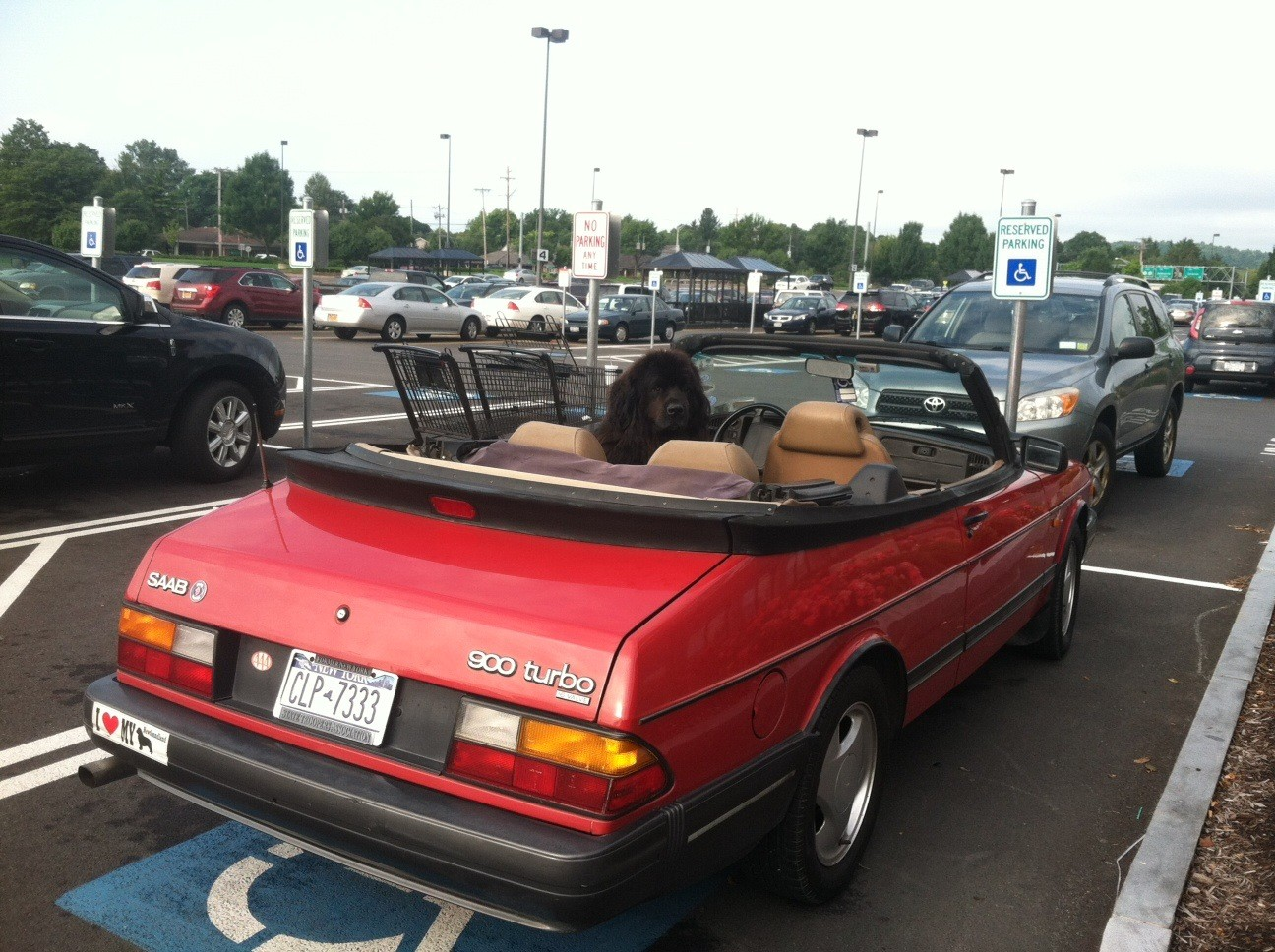 Wegman's Parking Lot, Labor Day Wkend...
