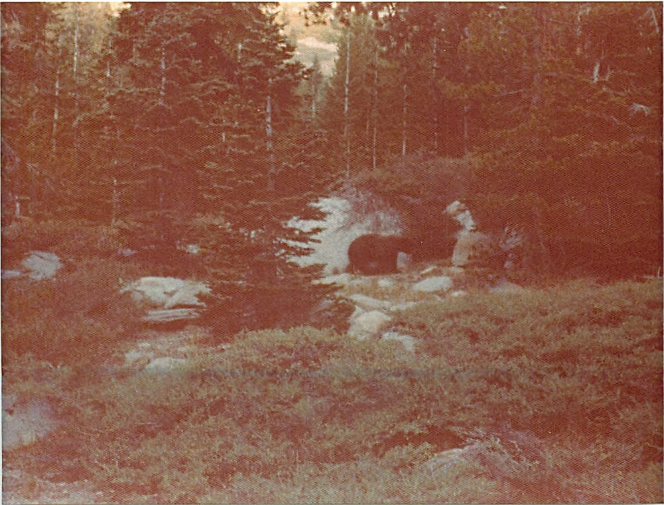 Bear in our campground, near Clouds Rest, Yosemite, 1975 California
