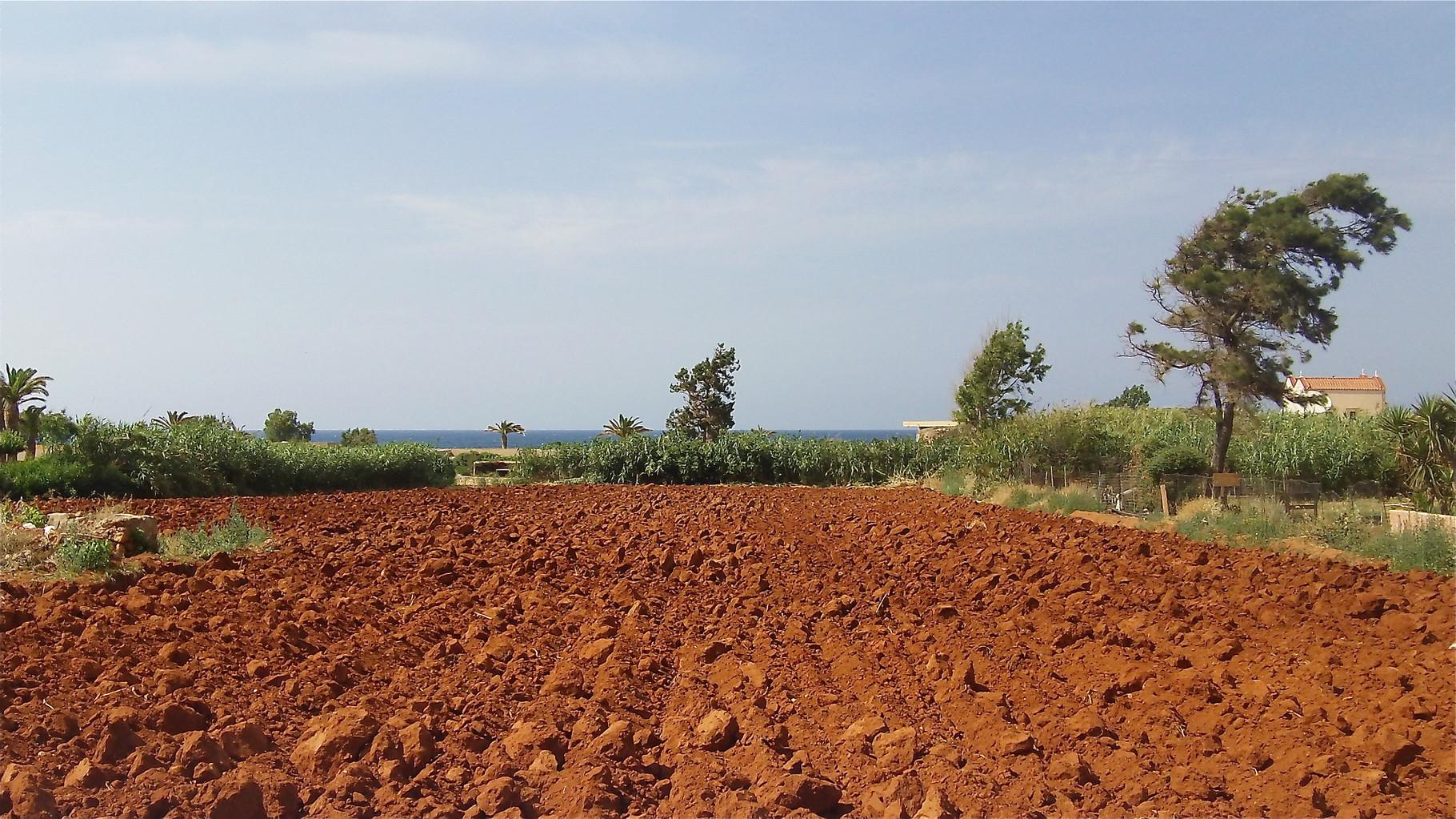 Cretan soil near Malia