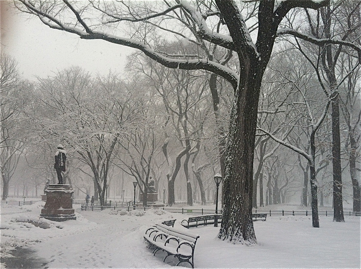 One of many Feb and March snowstorms, Central Park, 3-5-15