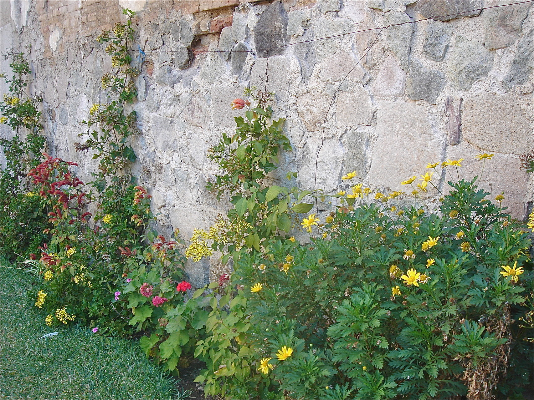 Monastery Walls, beautiful flowers