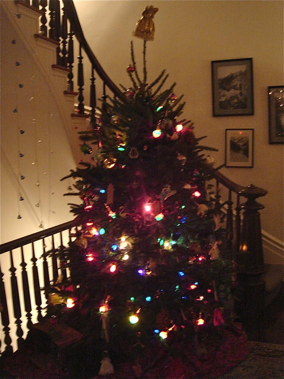 Our Xmas Tree, 2014