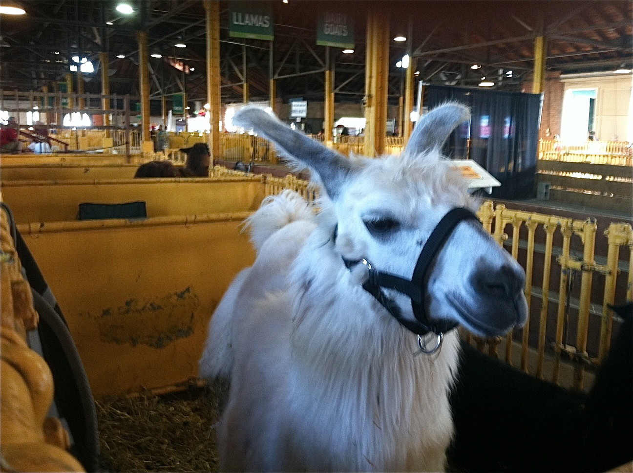 the llama is happy