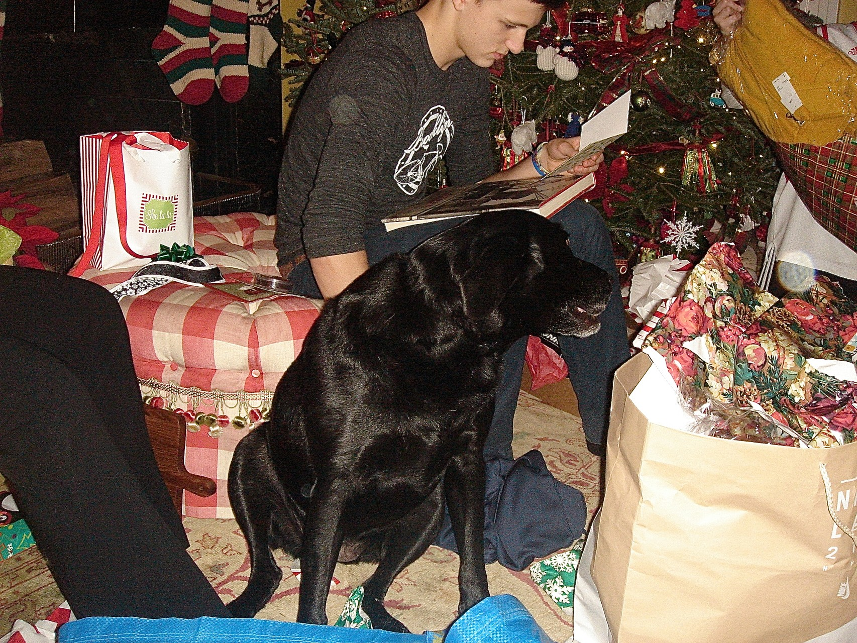 Lucy enjoys the presents.