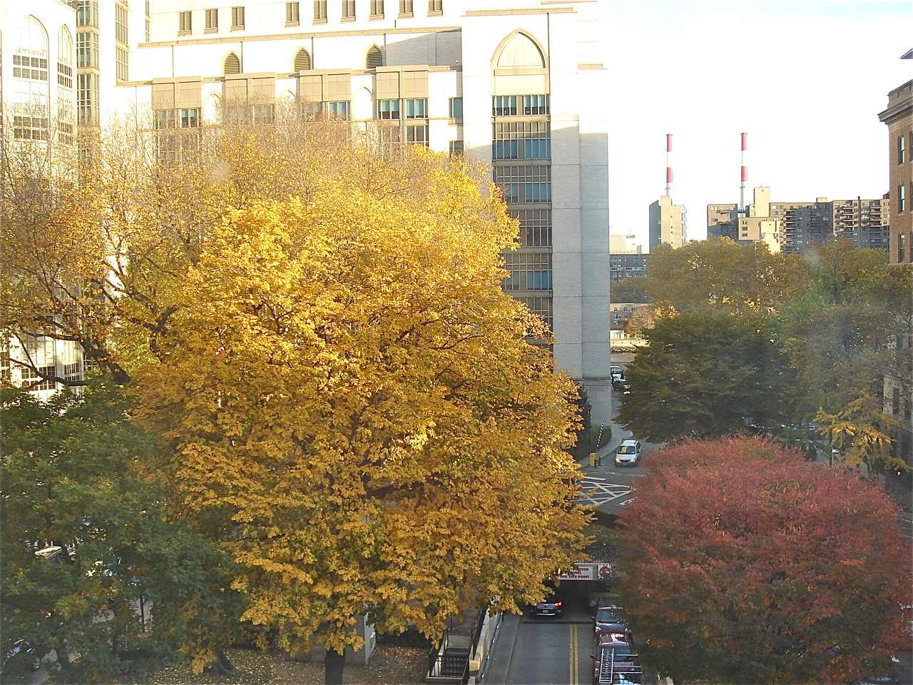 Fall scenery out my office window, looking at NY-Presbyterian Hospital