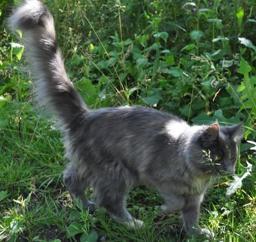 Sanfte Riesen Derrilin, pirscht sich ohne Angst und Furcht durch das hohe Gras