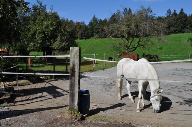 die Pferde geniessen die Herbstsonne