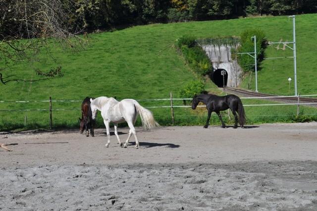 ...tja, neues Pferd - neue Rangordnung