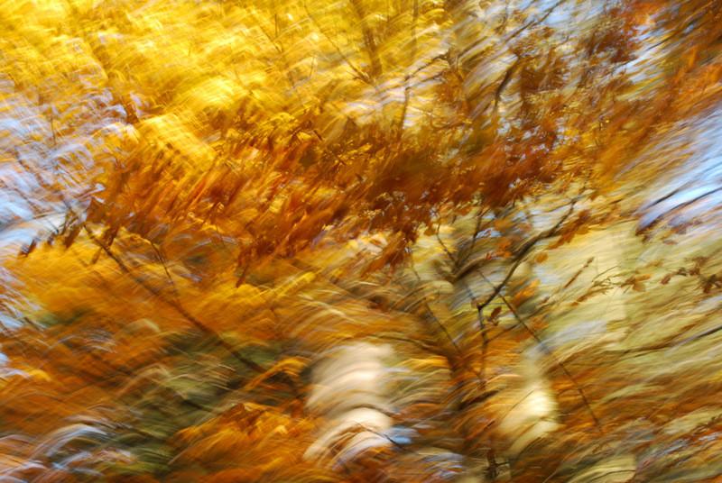 """Hohenpeißenberger Herbstwald #17"""