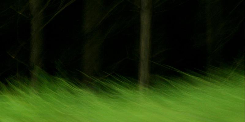 """""""Waldrand"""" (Der Weg ist das Ziel #3)"""
