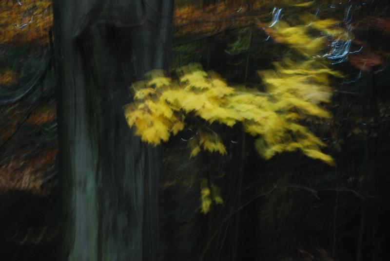 """Hohenpeißenberger Herbstwald #14"""