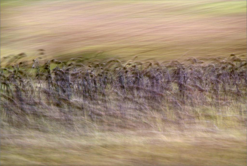 """""""Demut"""" aus der Serie """"Der Weg zum Paradies"""", 2014"""
