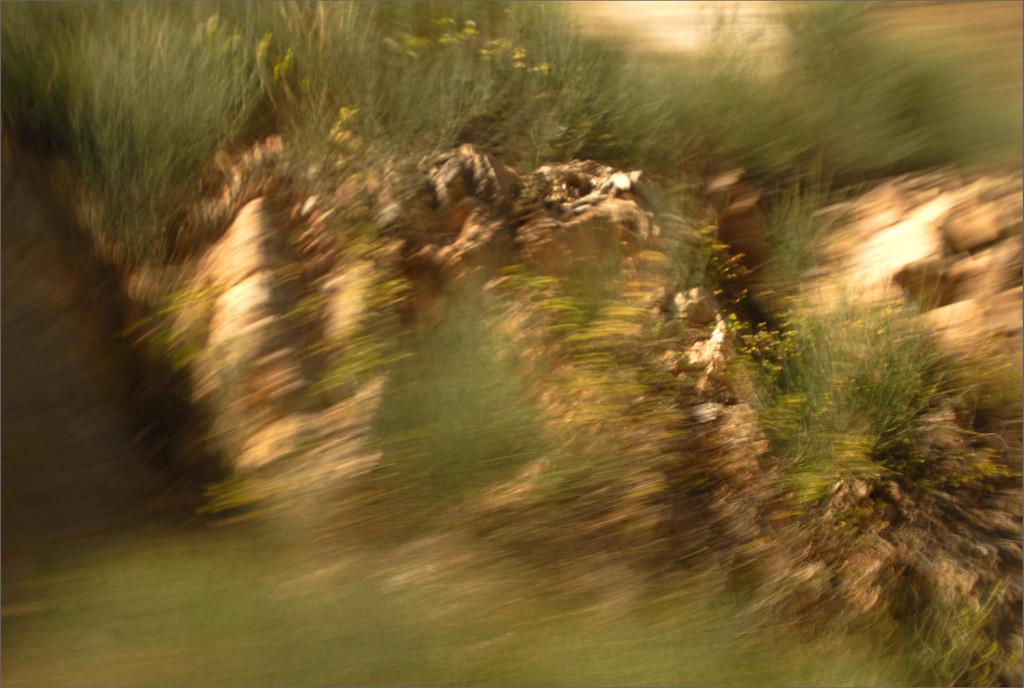 """""""Ginster"""" aus der Serie """"Der Weg zum Paradies"""", 2014"""