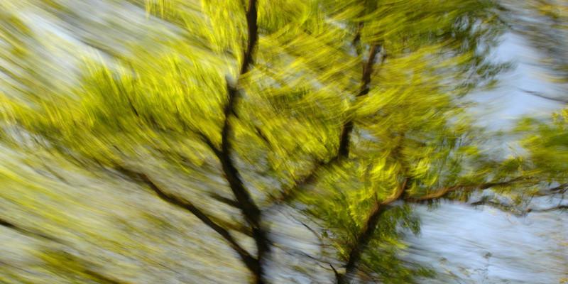 """""""Maibaum"""" (Der Weg ist das Ziel #9)"""