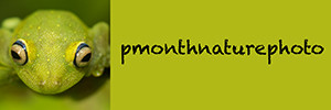 Homepage des französischen Naturfoto-Kollegen  Philippe Monthemont, dem ich im Feld bei den franz. V. aspis schon oft begegnet bin