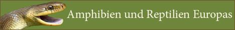 Homepage von Thomas Reich mit guten Fotos