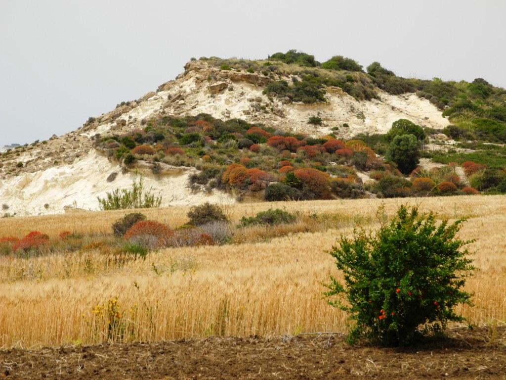 Wir sind ganz verzaubert von der Landschaft und der Vegetation.