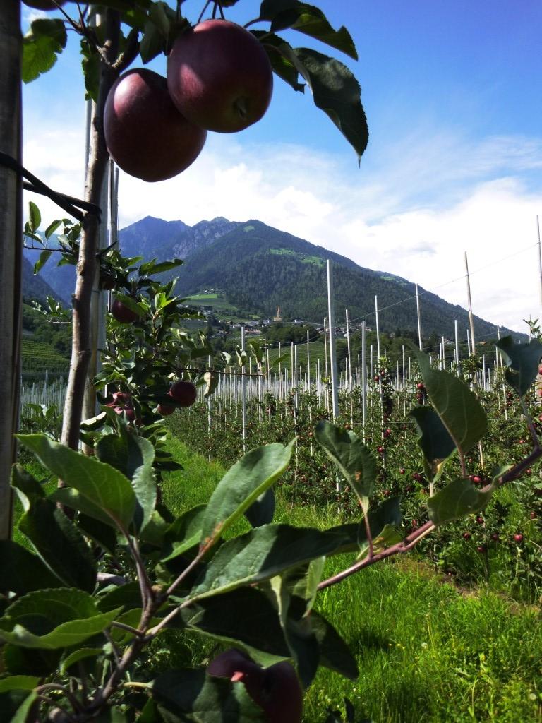 Äpfel wohin man schaut...