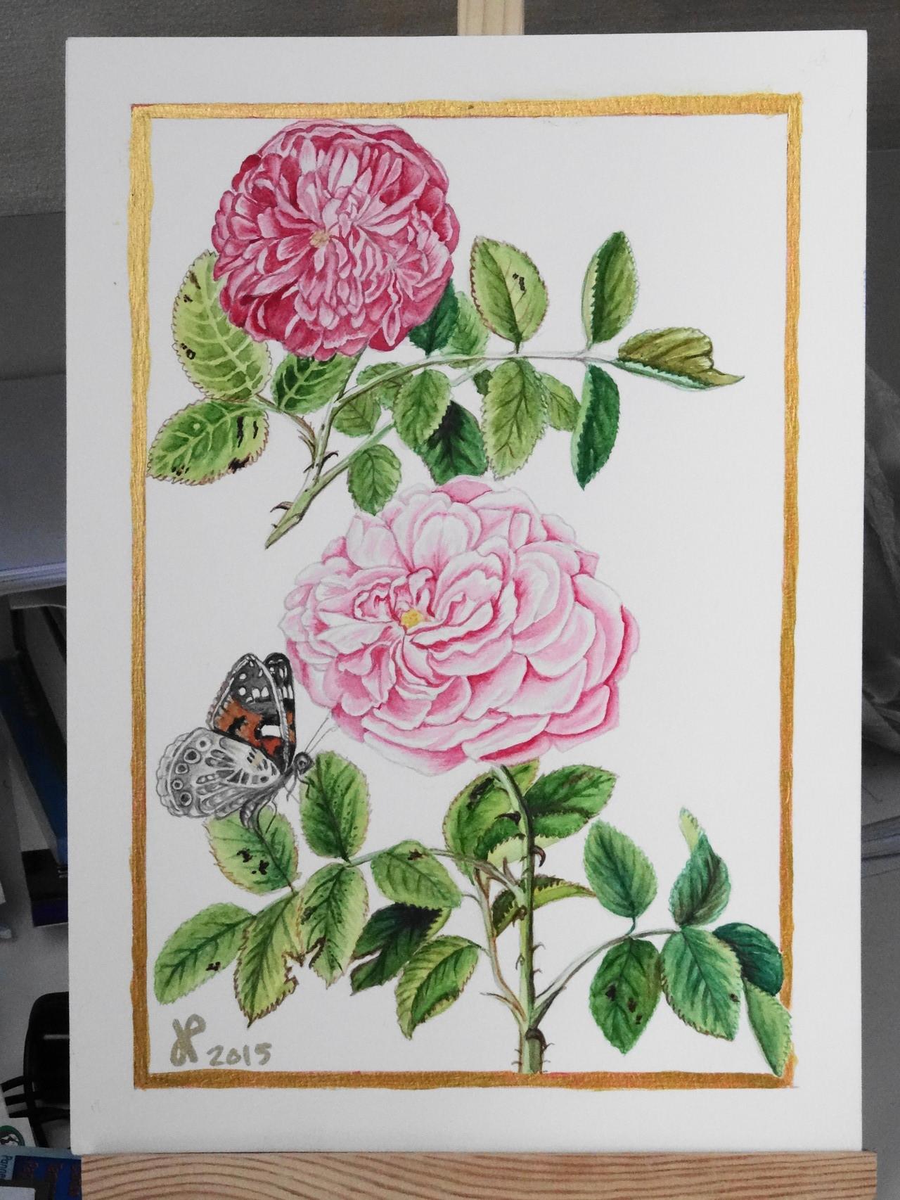 Roses Rabel 2015