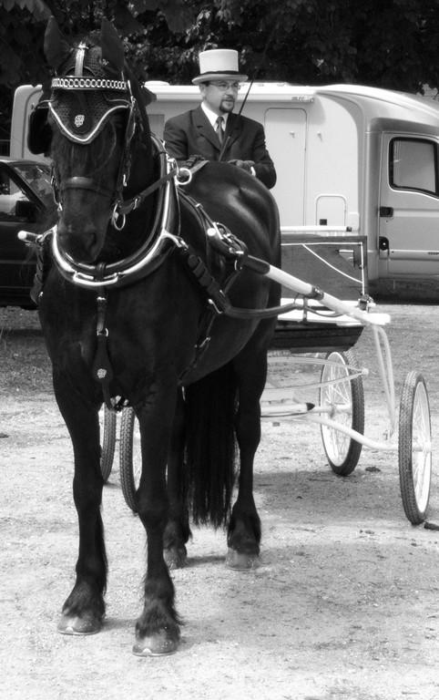 Pferd Wels