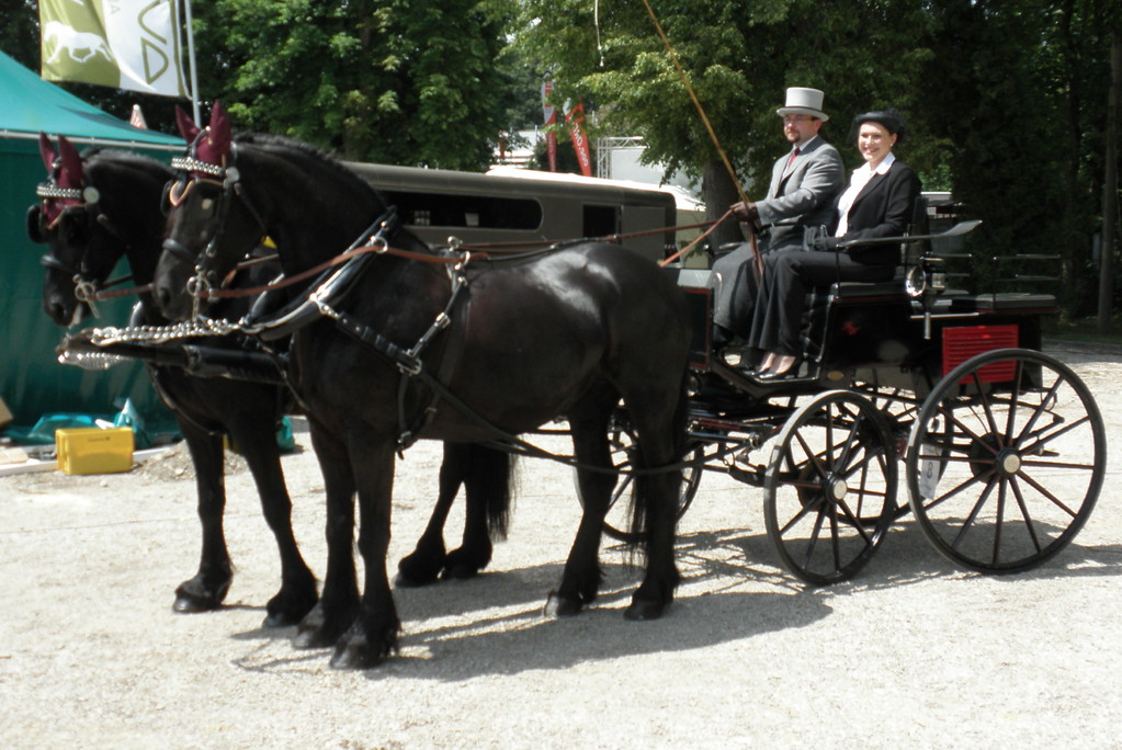 Concours de Elegance Pferd Wels 2009