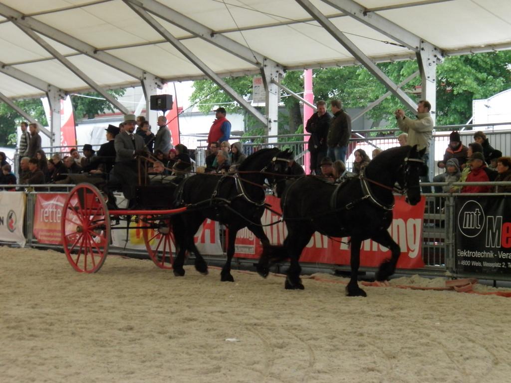 Concours de Elegance Pferde Wels 2010