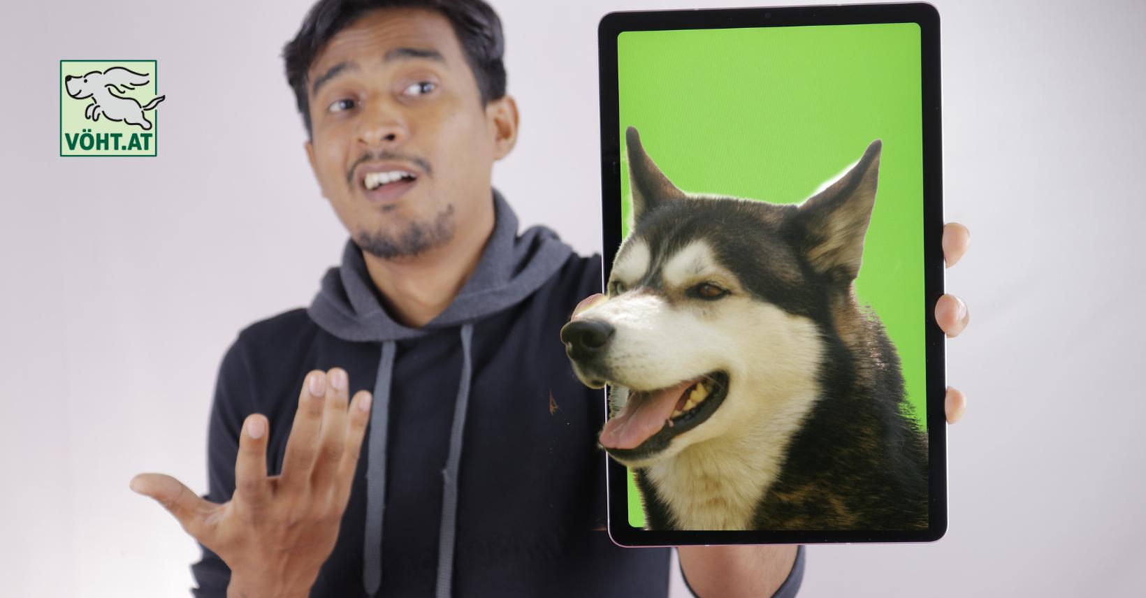 Hundetraining online – Fluch oder Segen?