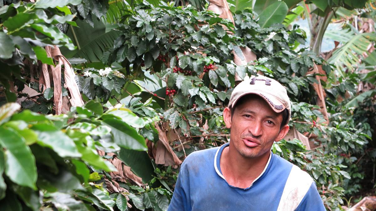 Jhon Jairo Monsalve vor den Kaffeesträuchern - seinem Stolz