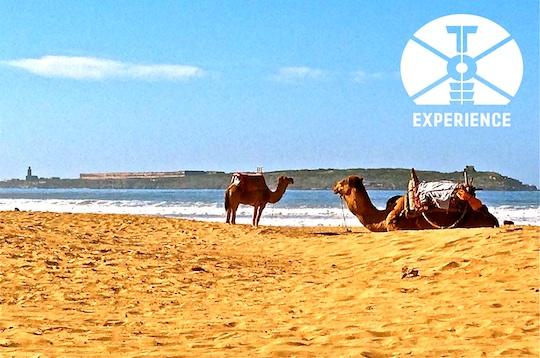 Ist das Offroad/Dirtroad Weltreisemobil Mobil nicht verfügbar geht es weiter im Wüstenschiff - Expeditionsmobil-Abenteuer-Reisen ... weltweit, dank Zuverlässigkeit