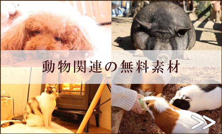 動物フリー素材無料
