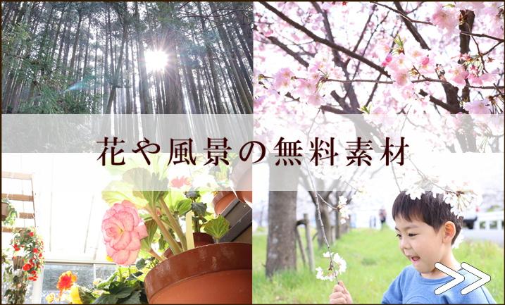 花や風景の無料素材