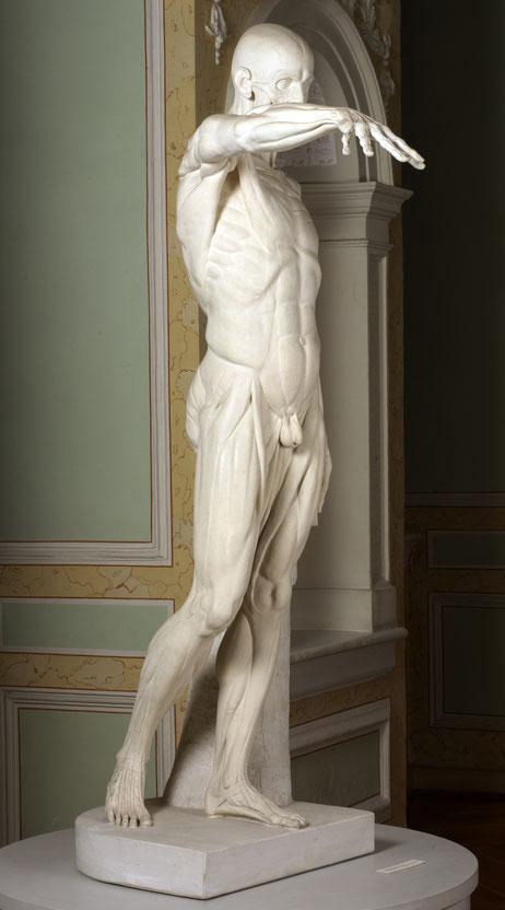 Jean-Antoine Houdon, Muskelmann (Écorchè) mit ausgestrecktem Arm, 1767
