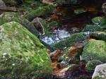 Nationalpark Harz----------foto: Luise/pixelio.de