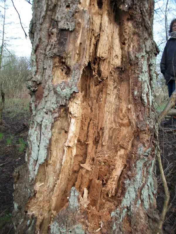 nur noch morsches Holz
