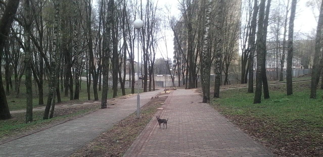 Найк в парке на прогулке