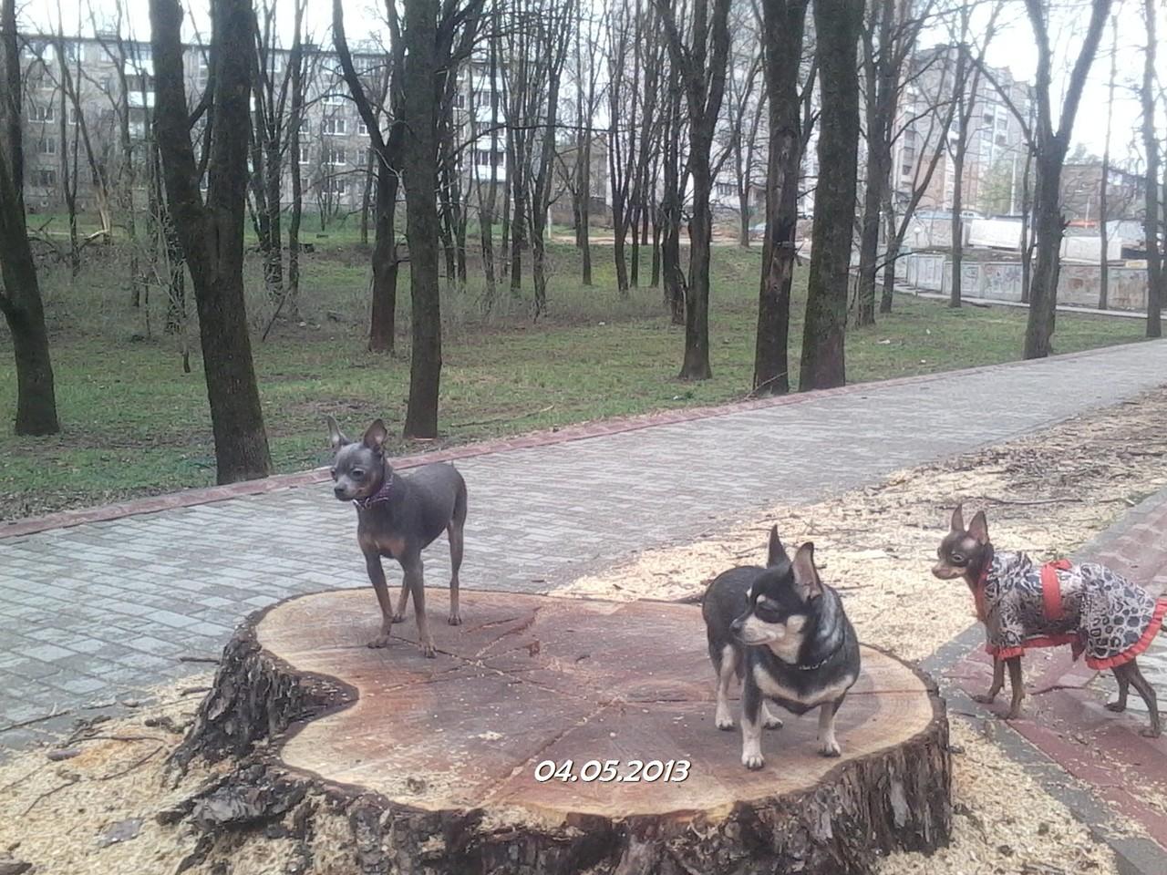 Найк с друзьями