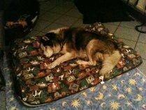 Arthus auf seiner Lieblings-Kuscheldecke. Hier hat er am liebsten entspannt .