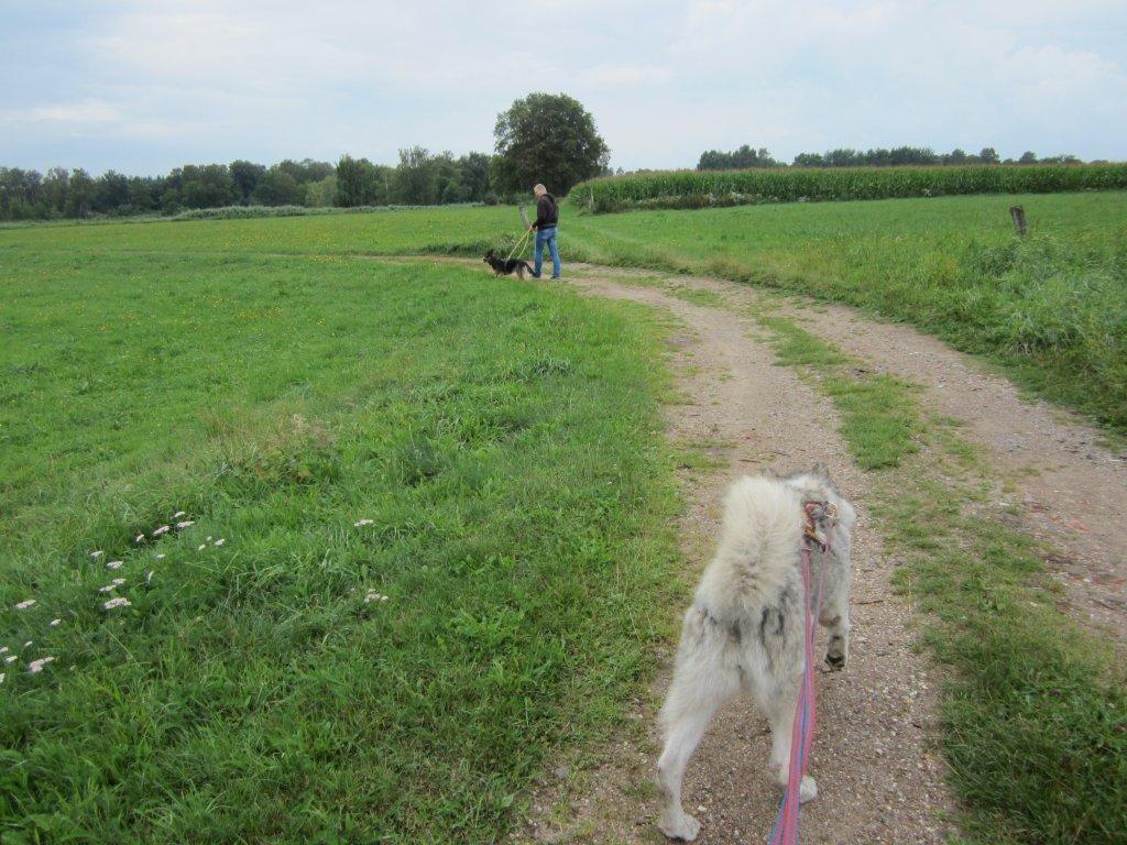 Spaziergang mit Stationshunden Maja und Mira