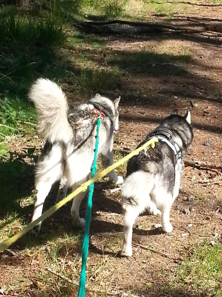 Auf einem Spaziergang zusammen mit Maja