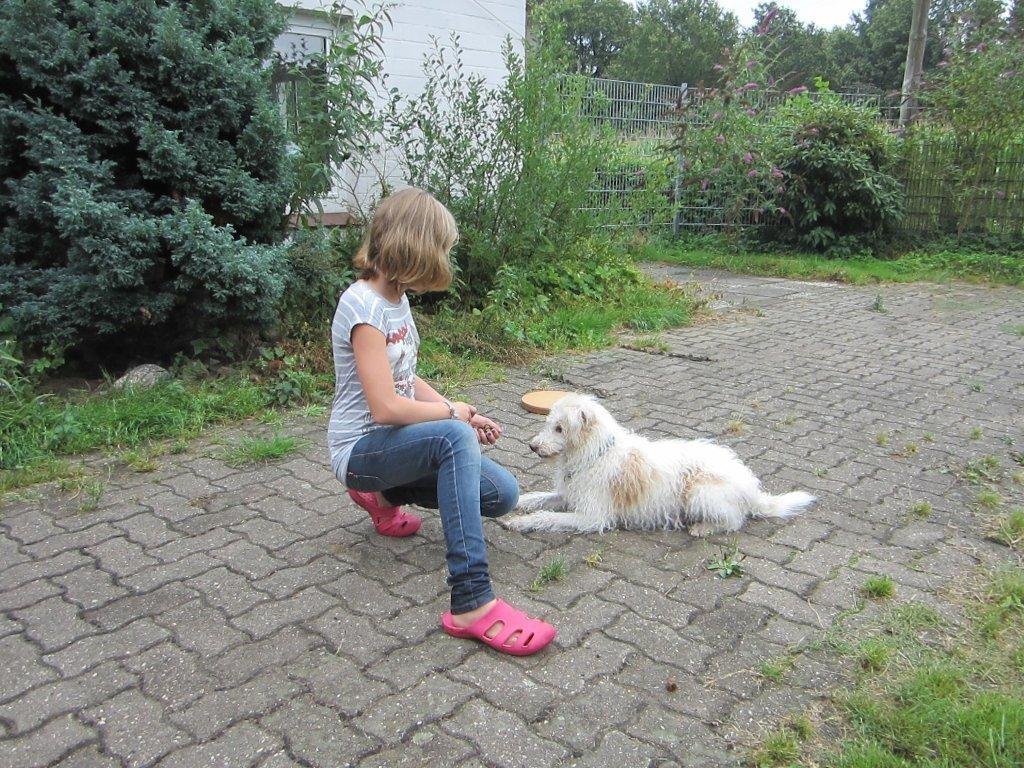 Training mit den Hunden