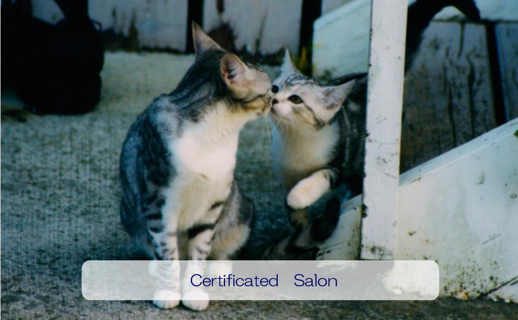 日本アニマルヒーリング協会が認定したサロン