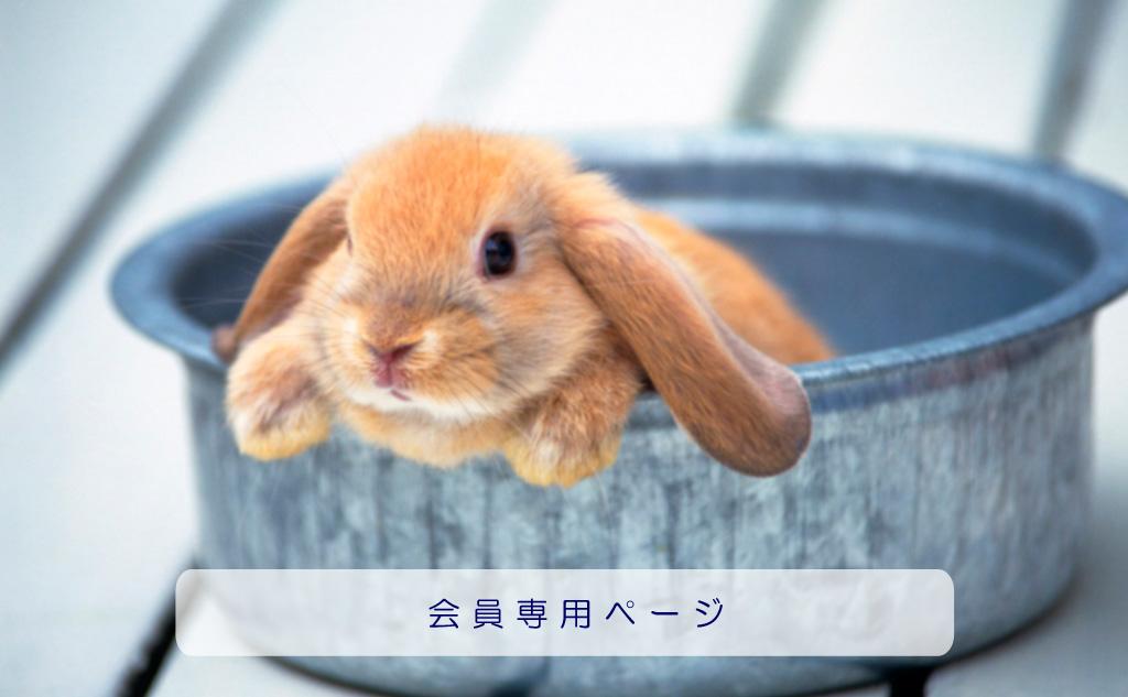 日本アニマルヒーリング協会 会員専用ページ