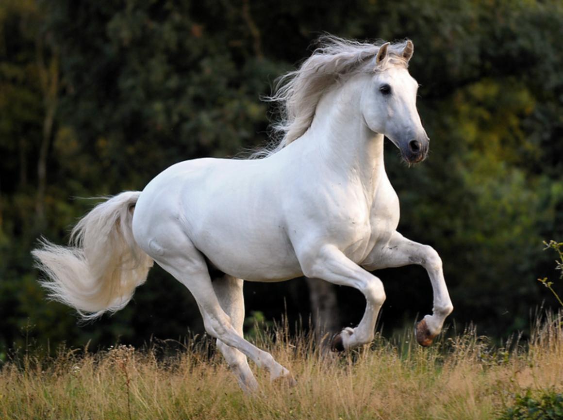 Ямская лошадь
