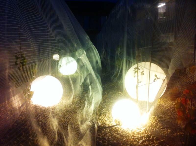 Vigna velata di notte