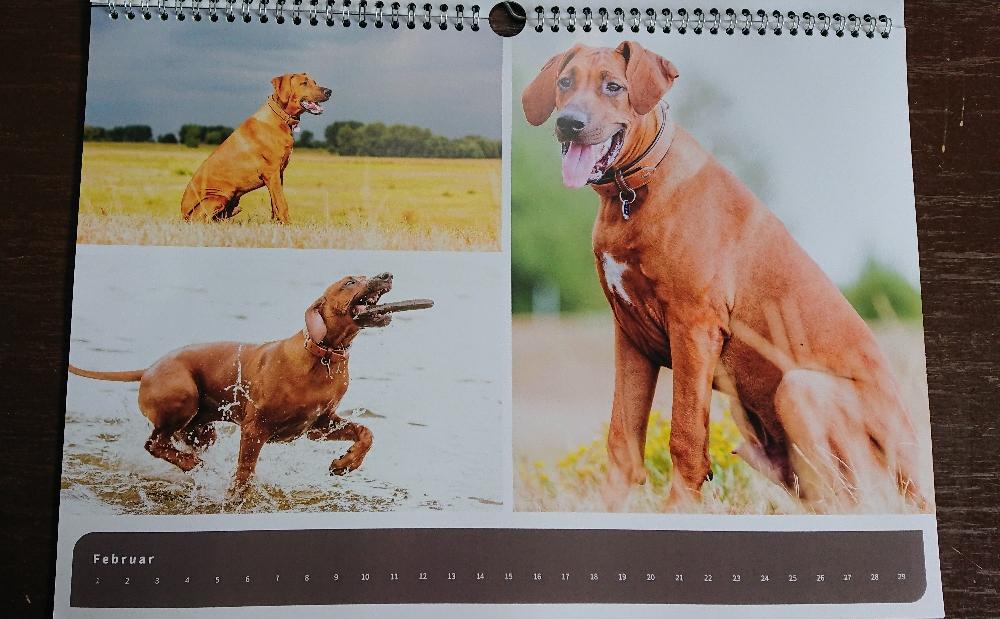 Kalendergeschenk von unseren Welpeneltern ♥️