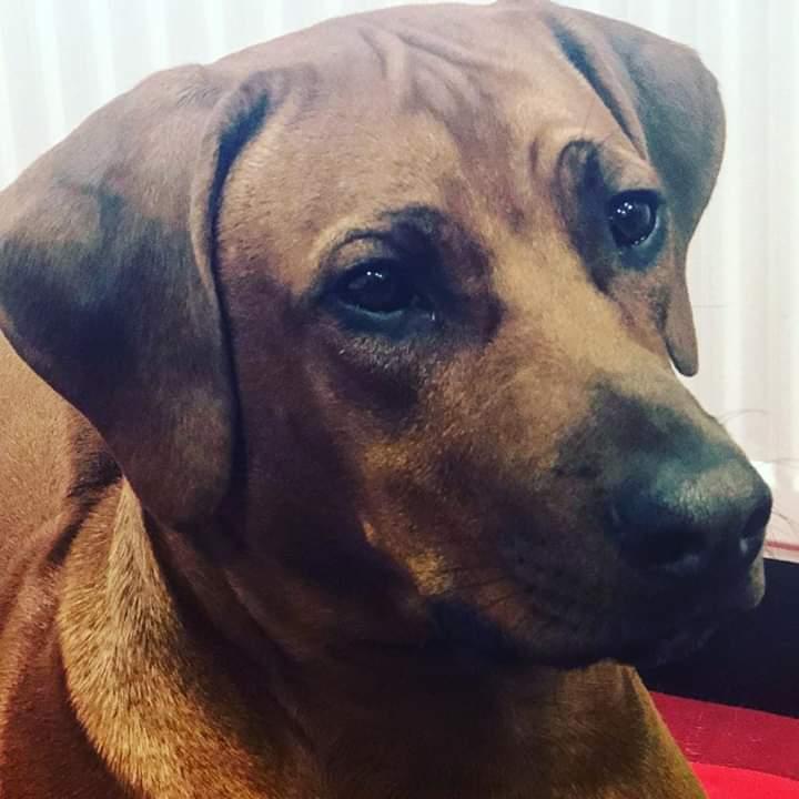 Cooper Jun. lebt mit seiner Familie und zwei Kindern in Düsseldorf und geht täglich mit ins Büro bei der Arbeit helfen ❤️Cooper liebt es bei den Kindern der Familie zu sein und seine ganzen Hundefreunde am Rhein zu treffen. Cooper liebt das Wasser. Der Sonnenschein seiner ganzen Familie