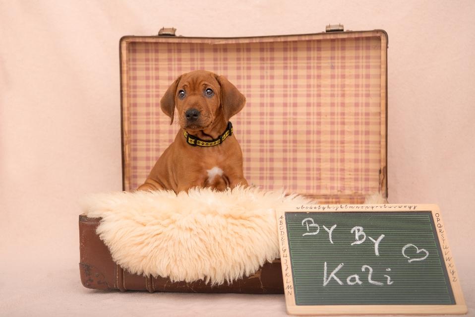 Kali lebt jetzt in Luxemburg mit ihrer Familie und wird bestimmt auf der ein oder anderen Ausstellung zu sehen sein ❤️