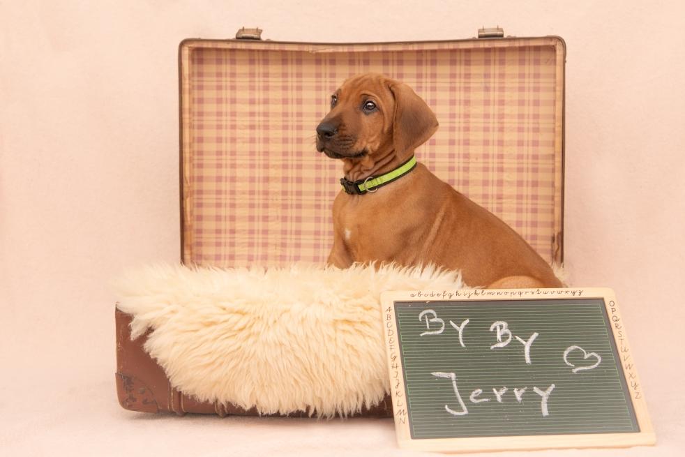 Jerry lebt jetzt in Wuppertal und begleitet dort seine Familie mit zwei großen Kindern ❤️