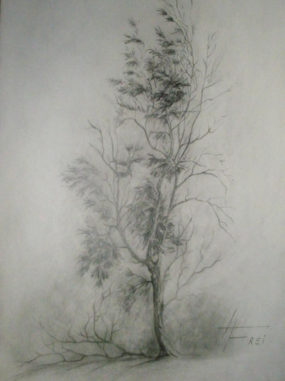 """ART HFrei - """"Baum-Studie"""" - Bleistift - 2007"""