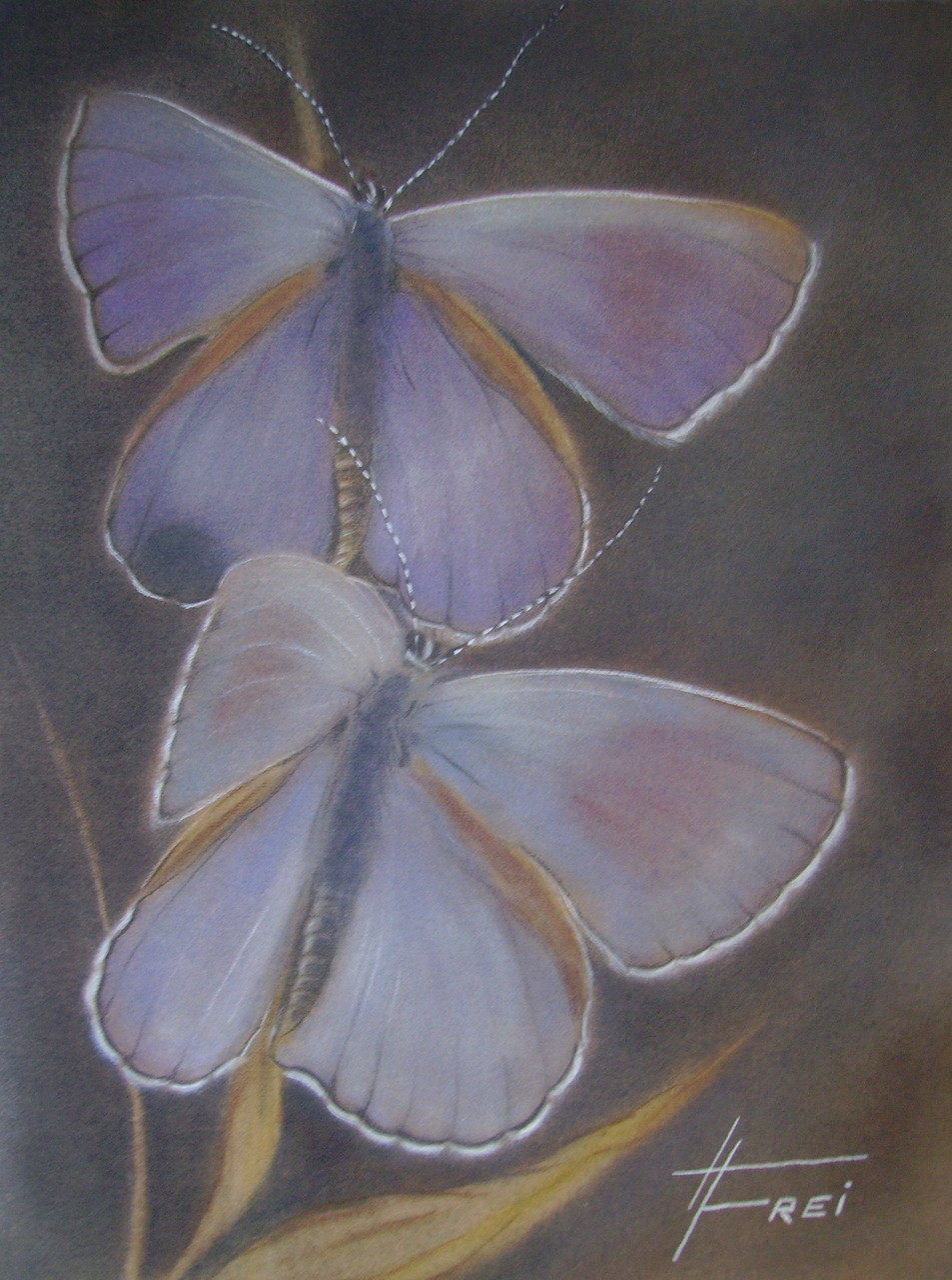 "ART HFrei - ""Butterfly"" - Pastell - 2006"